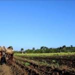 Concurso pretende premiar las prácticas agrícolas que se han adaptado al cambio climático