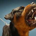 2015 reporta 17 niños mordidos por perros, HNN pide precaución para evitar incidentes