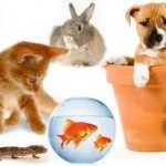 Antes de elegir mascota pregúntese si es la adecuada para usted o su familia