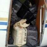 Allanan viviendas de pilotos guatemaltecos detenidos con droga en avioneta