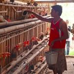 Avicultores externan preocupación ante el  levantamiento del veto al Código Procesal Laboral