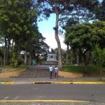 Municipalidad de San José cortará 27 árboles dañados en el Parque Nacional