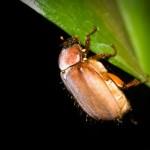 """Calor, mosquitos y """"abejones de mayo"""": el indicio de la llegada del invierno"""