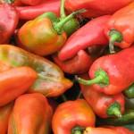 Chile dulce de Costa Rica cautiva a más estadounidenses