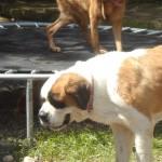 Presionarán al Gobierno y diputados para que se apruebe ley que penaliza maltrato animal