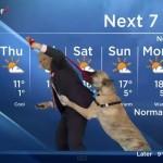 Presentador del clima es sorprendido en vivo por perro juguetón