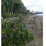 Cortan bosque de mangle en Golfito