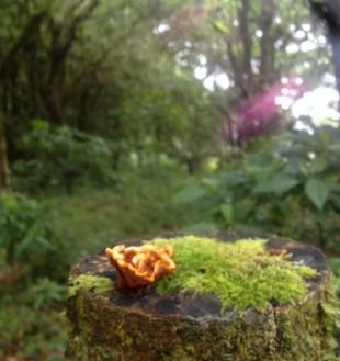 La foto del día en el bosque nuboso