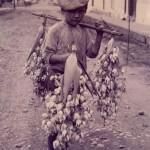 La Costa Rica de Ayer la flor de itabo