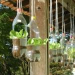 Ministerio de Agricultura incentiva el cultivo  de hortalizas en recipientes reciclados