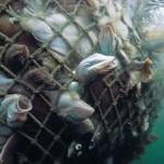 Decreto para protección de peces que viven en ecosistemas dulceacuícolas ya dio su primer paso