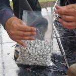 Policía decomisó 848 piedras de crack en San José y Limón