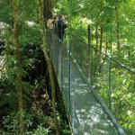 Costa Rica figura en la lista de los 25 bosques mágicos del mundo, según comunidad de viajeros