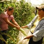 Unas 300.000 mujeres se sumaron al Programa Mundial de Alimentos