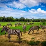 La foto del día África...pero en Costa Rica