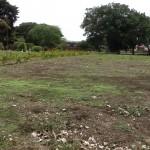 Ante saturación de cementerios, Municipalidad de San José reutiliza espacios