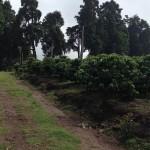 Coopronaranjo recibió reconocimiento por su lucha contra la degradación de los suelos