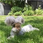 Wally, un conejo con un peinado a la moda