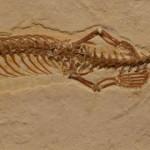 Fósil de serpiente con patas podría ser eslabón perdido de la evolución