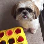 Video: Astuto perrito distingue formas y es sensación en redes sociales