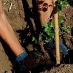 Cinco mil árboles revivirán el cerro La Trinidad tras voraz incendio del 2008