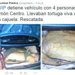 Piden más policías ante ataques a tortugas que arriban a playas de Moín