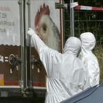 Hallan decenas de refugiados muertos en camión en  Austria