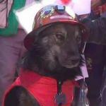 ¿Por qué un perro boliviano acumula miles de seguidores en Facebook?
