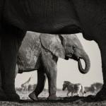 Galería muestra las mejores fotos de vida silvestre del año